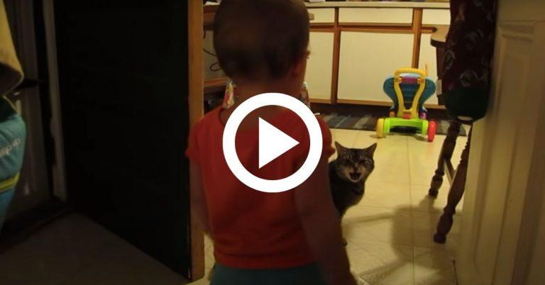 A kislány a cicával beszélget, a szülőknek szerencsére sikerült felvenni ezt a mókás pillanatot