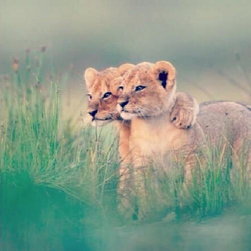 Egy kis ölelés mindenkinek kell: megható képek az állatvilágból