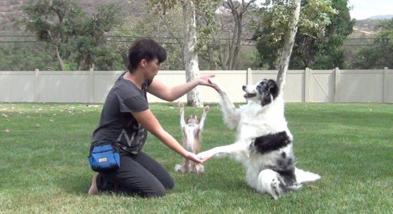 Fantasztikus mit csinálnak ezek a kutyák a gazdájuk kérésére!
