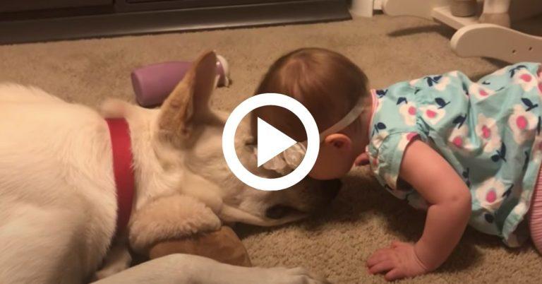 A kislány rajong a kutyáért, ezért puszit ad neki, a kutya pedig tündérien viszonozza a szeretetét